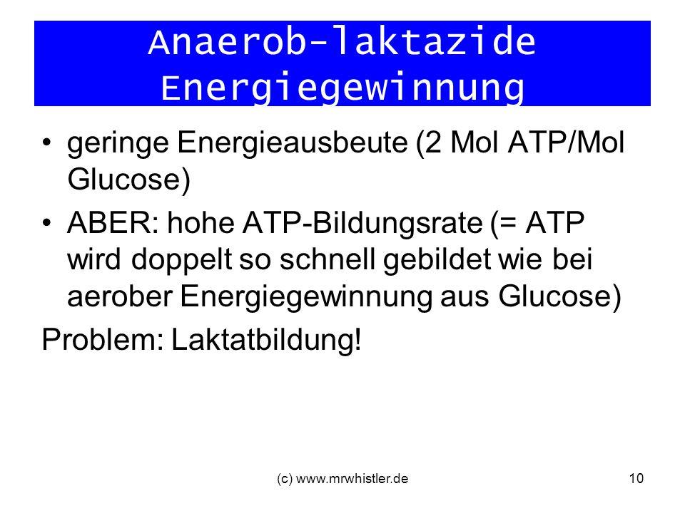 (c) www.mrwhistler.de10 Anaerob-laktazide Energiegewinnung geringe Energieausbeute (2 Mol ATP/Mol Glucose) ABER: hohe ATP-Bildungsrate (= ATP wird dop