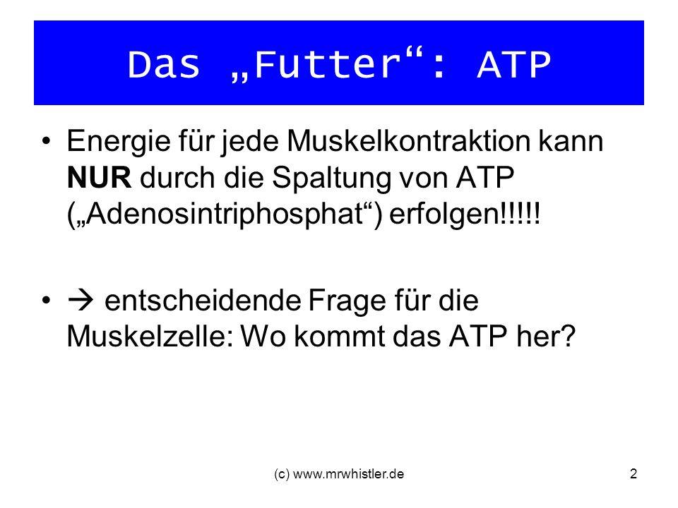 (c) www.mrwhistler.de2 Das Futter: ATP Energie für jede Muskelkontraktion kann NUR durch die Spaltung von ATP (Adenosintriphosphat) erfolgen!!!!! ents