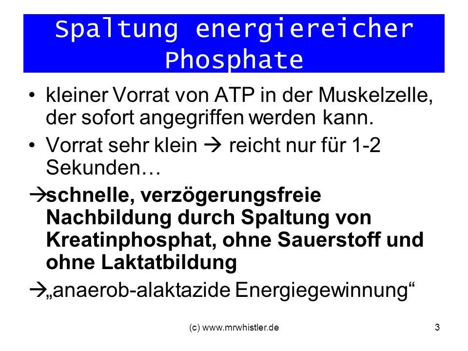 (c) www.mrwhistler.de3 Spaltung energiereicher Phosphate kleiner Vorrat von ATP in der Muskelzelle, der sofort angegriffen werden kann. Vorrat sehr kl