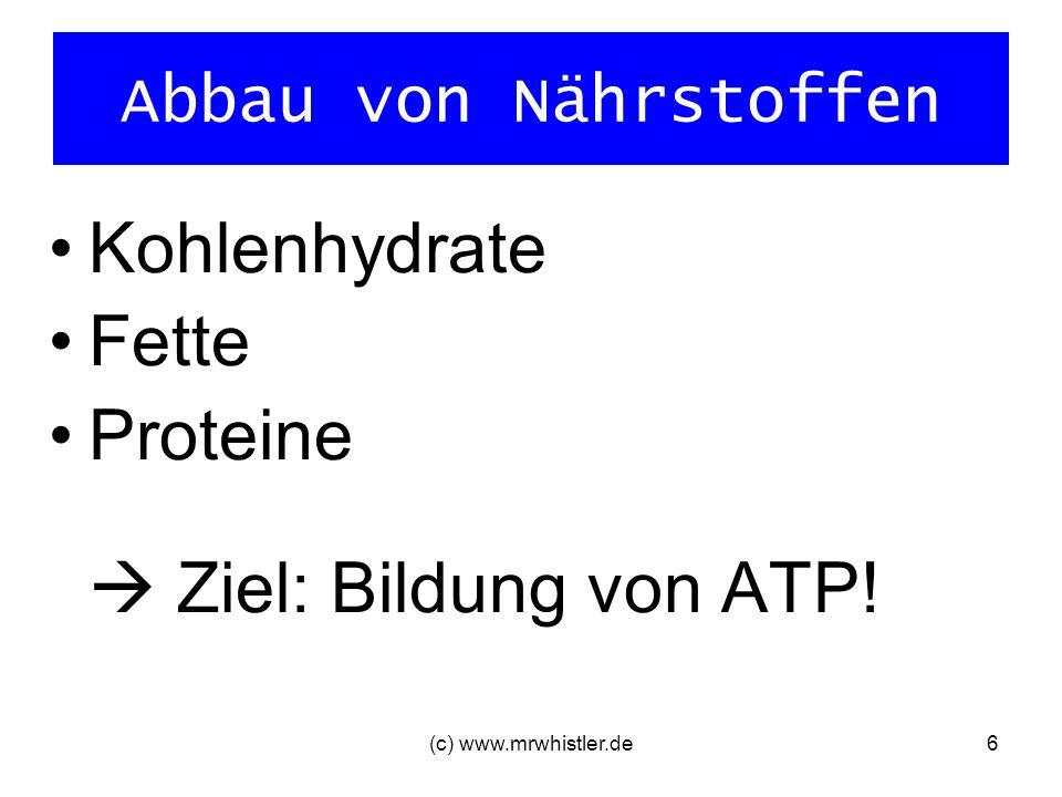 (c) www.mrwhistler.de7 Aerobe Energiegewinnung Abbau von Kohlenhydraten (Glucose) und Fetten geringe bis mittlere Intensitäten Sauerstoff reicht der Muskelzelle, um ATP bereitzustellen 38 Mol ATP/Mol Glucose