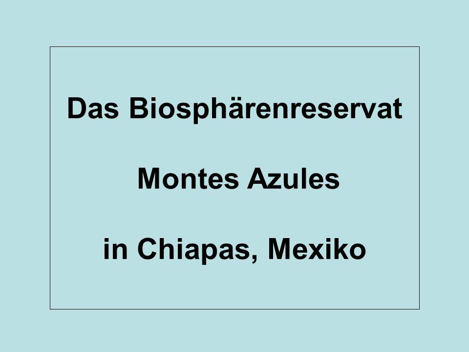 Das Biosphärenreservat Montes Azules in Chiapas, Mexiko