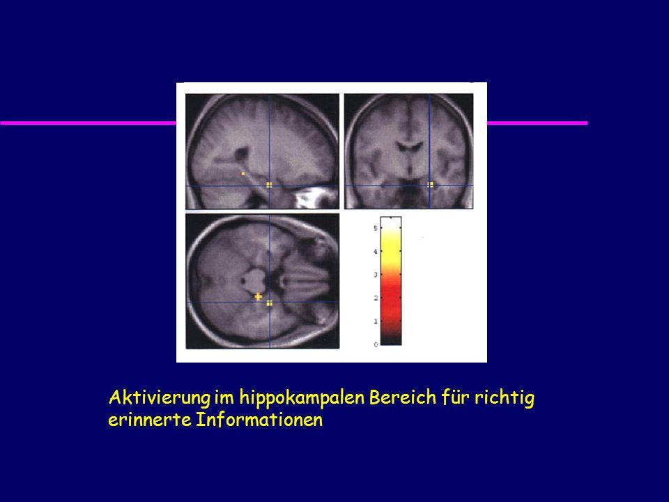 Aktivierung im hippokampalen Bereich für richtig erinnerte Informationen