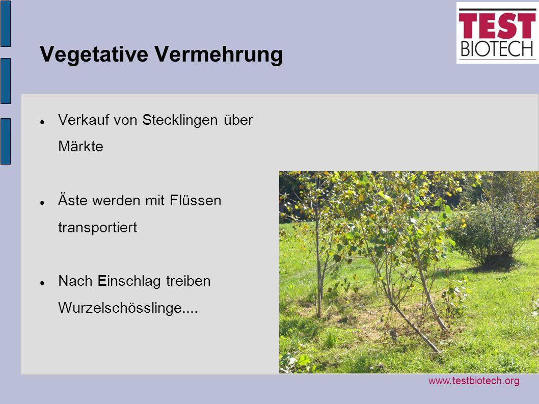 Vegetative Vermehrung Verkauf von Stecklingen über Märkte Äste werden mit Flüssen transportiert Nach Einschlag treiben Wurzelschösslinge.... www.testb