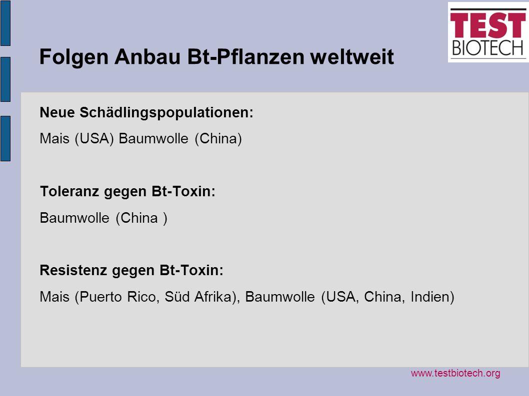 Folgen Anbau Bt-Pflanzen weltweit Neue Schädlingspopulationen: Mais (USA) Baumwolle (China) Toleranz gegen Bt-Toxin: Baumwolle (China ) Resistenz gege