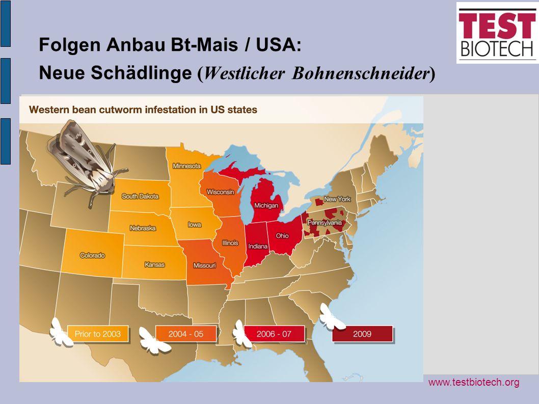 Folgen Anbau Bt-Mais / USA: Neue Schädlinge (Westlicher Bohnenschneider) www.testbiotech.org