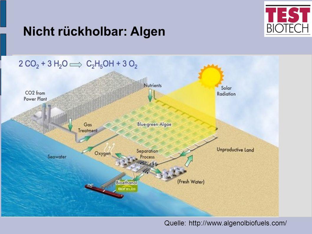 Nicht rückholbar: Algen Quelle: http://www.algenolbiofuels.com/