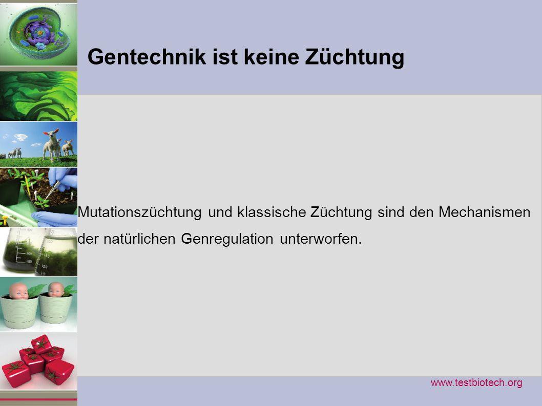 Gentechnik ist keine Züchtung Mutationszüchtung und klassische Züchtung sind den Mechanismen der natürlichen Genregulation unterworfen. www.testbiotec