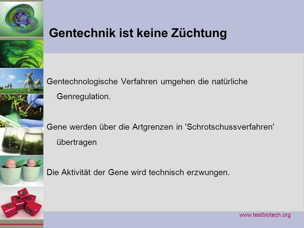 Gentechnik ist keine Züchtung Gentechnologische Verfahren umgehen die natürliche Genregulation. Gene werden über die Artgrenzen in 'Schrotschussverfah