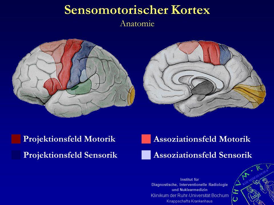 KOE MSM III 08/05-9 Institut für Diagnostische, Interventionelle Radiologie und Nuklearmedizin Klinikum der Ruhr-Universität Bochum Knappschafts Krankenhaus Sensomotorischer Kortex fMRI-Ergebnis