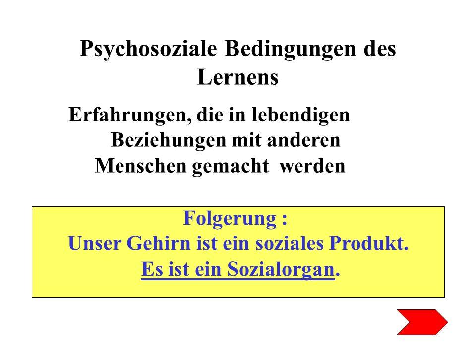 Psychosoziale Bedingungen des Lernens Erfahrungen, die in lebendigen Beziehungen mit anderen Menschen gemacht werden Folgerung : Unser Gehirn ist ein
