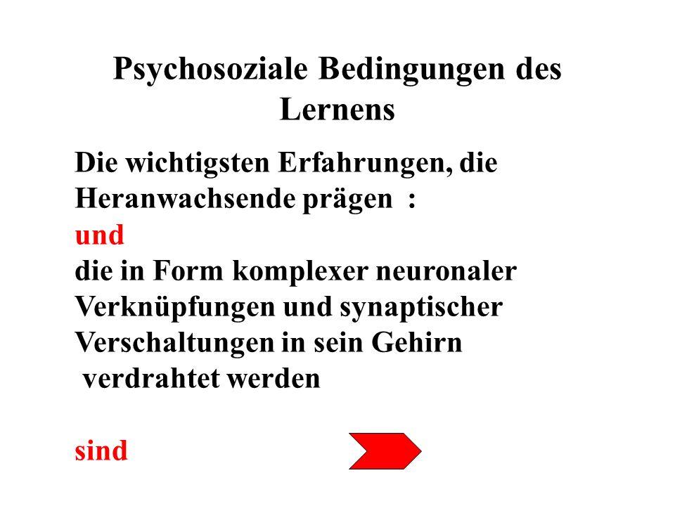 Psychosoziale Bedingungen des Lernens Erfahrungen, die in lebendigen Beziehungen mit anderen Menschen gemacht werden Folgerung : Unser Gehirn ist ein soziales Produkt.