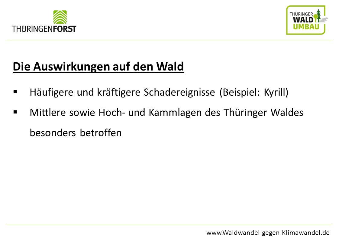 www.Waldwandel-gegen-Klimawandel.de Die Auswirkungen auf den Wald Häufigere und kräftigere Schadereignisse (Beispiel: Kyrill) Mittlere sowie Hoch- und