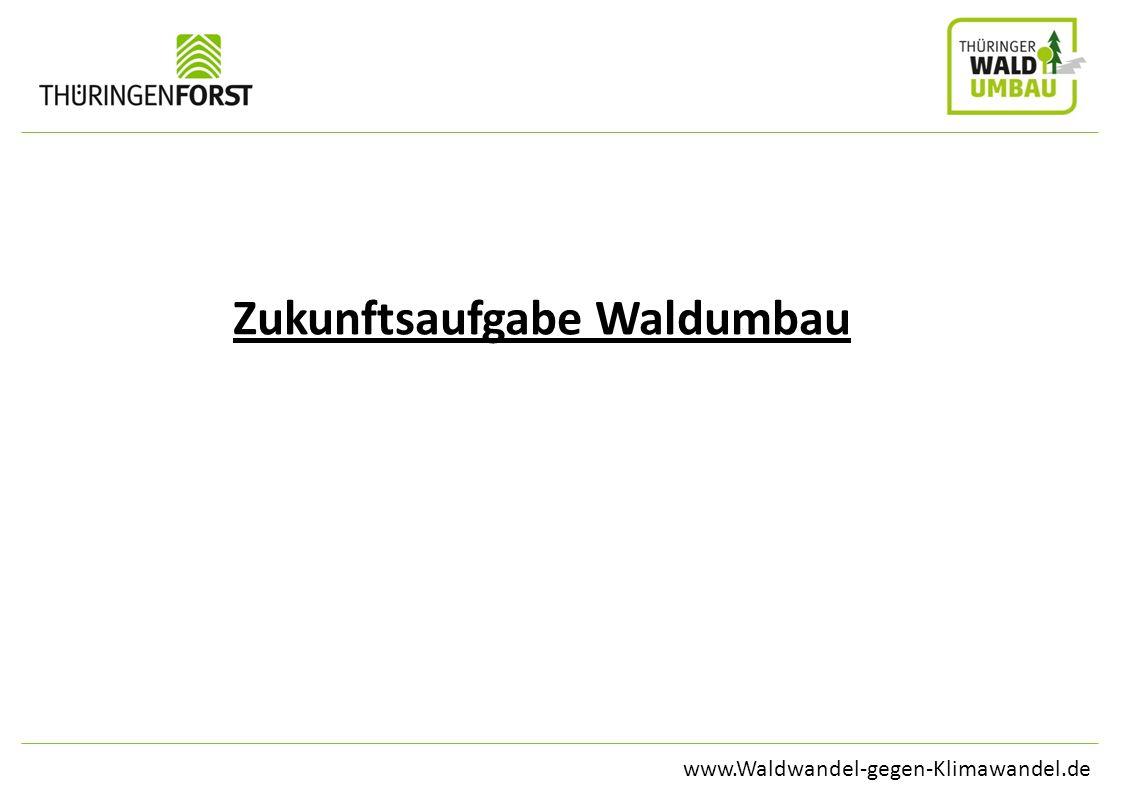 www.Waldwandel-gegen-Klimawandel.de Zukunftsaufgabe Waldumbau