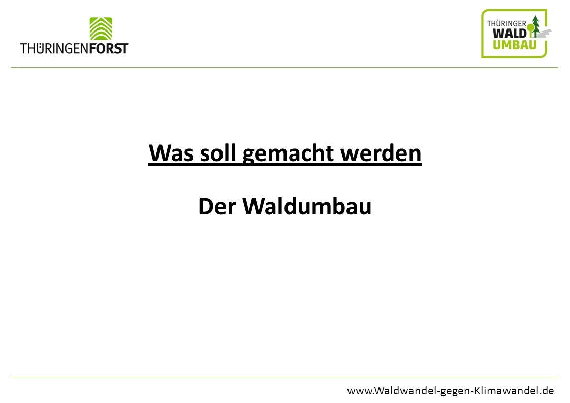 www.Waldwandel-gegen-Klimawandel.de Was soll gemacht werden Der Waldumbau