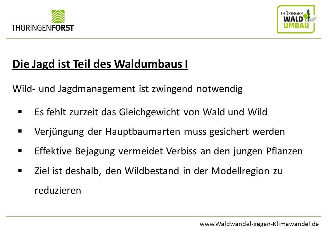 www.Waldwandel-gegen-Klimawandel.de Die Jagd ist Teil des Waldumbaus I Wild- und Jagdmanagement ist zwingend notwendig Es fehlt zurzeit das Gleichgewi