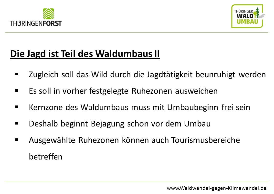 www.Waldwandel-gegen-Klimawandel.de Die Jagd ist Teil des Waldumbaus II Zugleich soll das Wild durch die Jagdtätigkeit beunruhigt werden Es soll in vo