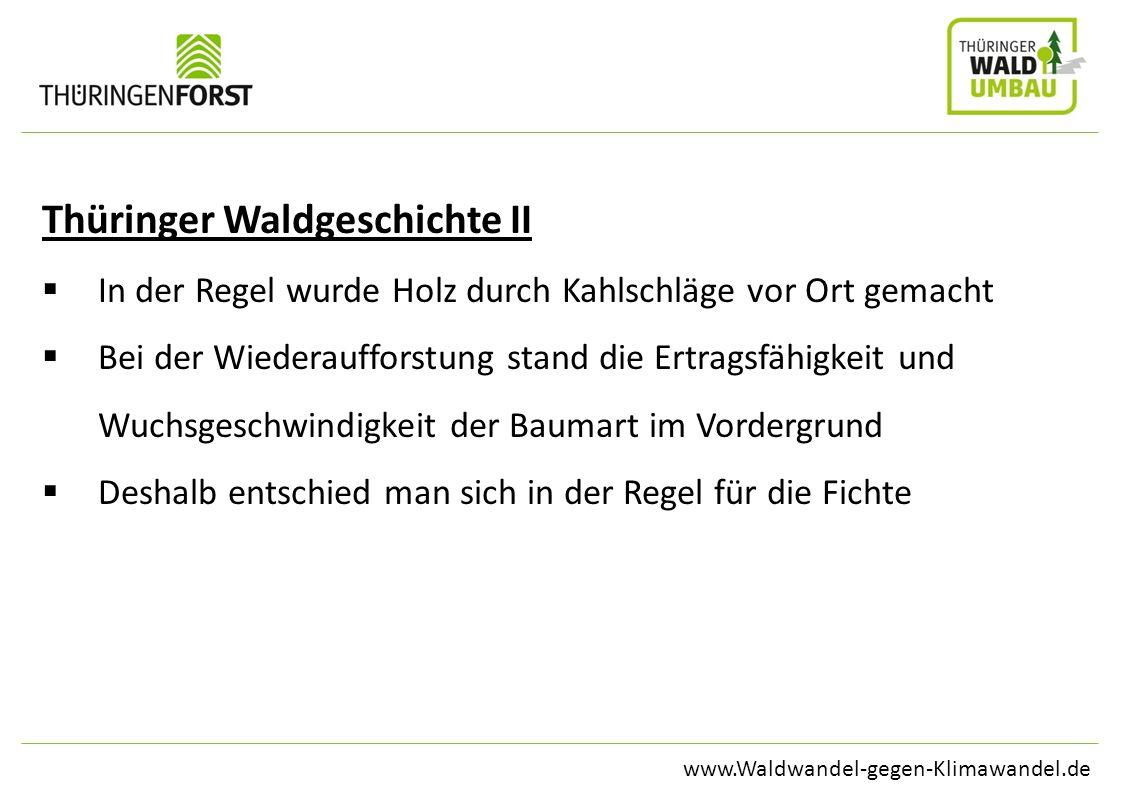 www.Waldwandel-gegen-Klimawandel.de Thüringer Waldgeschichte II In der Regel wurde Holz durch Kahlschläge vor Ort gemacht Bei der Wiederaufforstung st