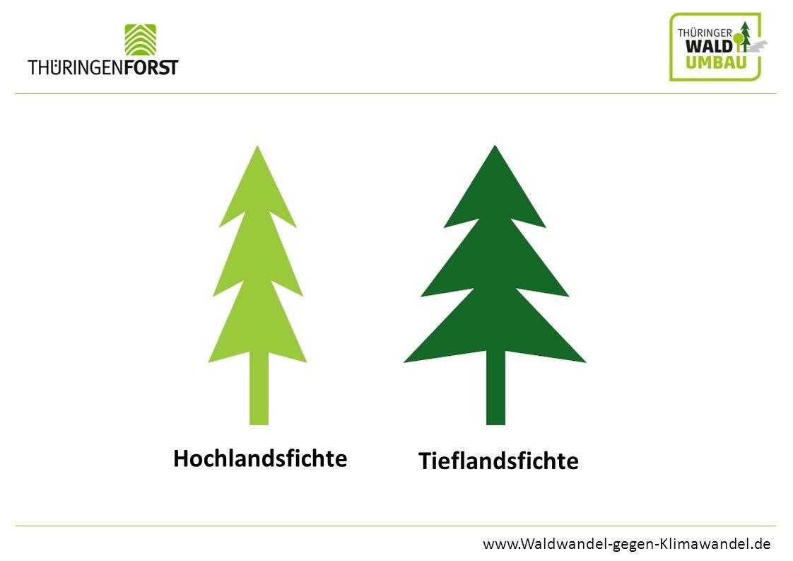 www.Waldwandel-gegen-Klimawandel.de Hochlandsfichte Tieflandsfichte