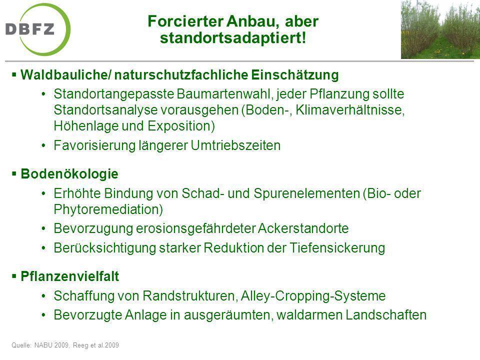 Forcierter Anbau, aber standortsadaptiert! Waldbauliche/ naturschutzfachliche Einschätzung Standortangepasste Baumartenwahl, jeder Pflanzung sollte St