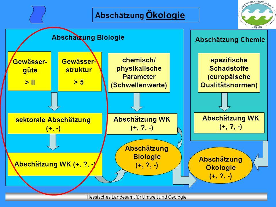 Hessisches Landesamt für Umwelt und Geologie Abschätzung Ökologie Gewässer- güte > II Gewässer- struktur > 5 chemisch/ physikalische Parameter (Schwel