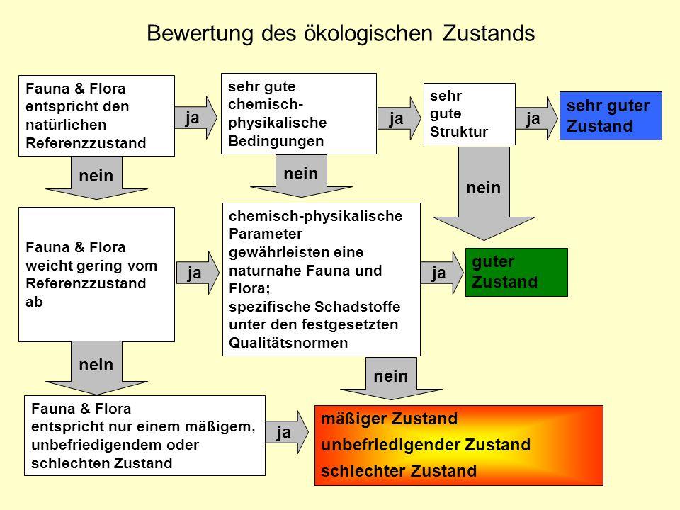 Bewertung des ökologischen Zustands Fauna & Flora entspricht den natürlichen Referenzzustand sehr gute chemisch- physikalische Bedingungen sehr gute S