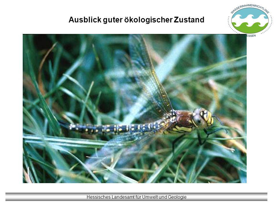 Hessisches Landesamt für Umwelt und Geologie Ausblick guter ökologischer Zustand