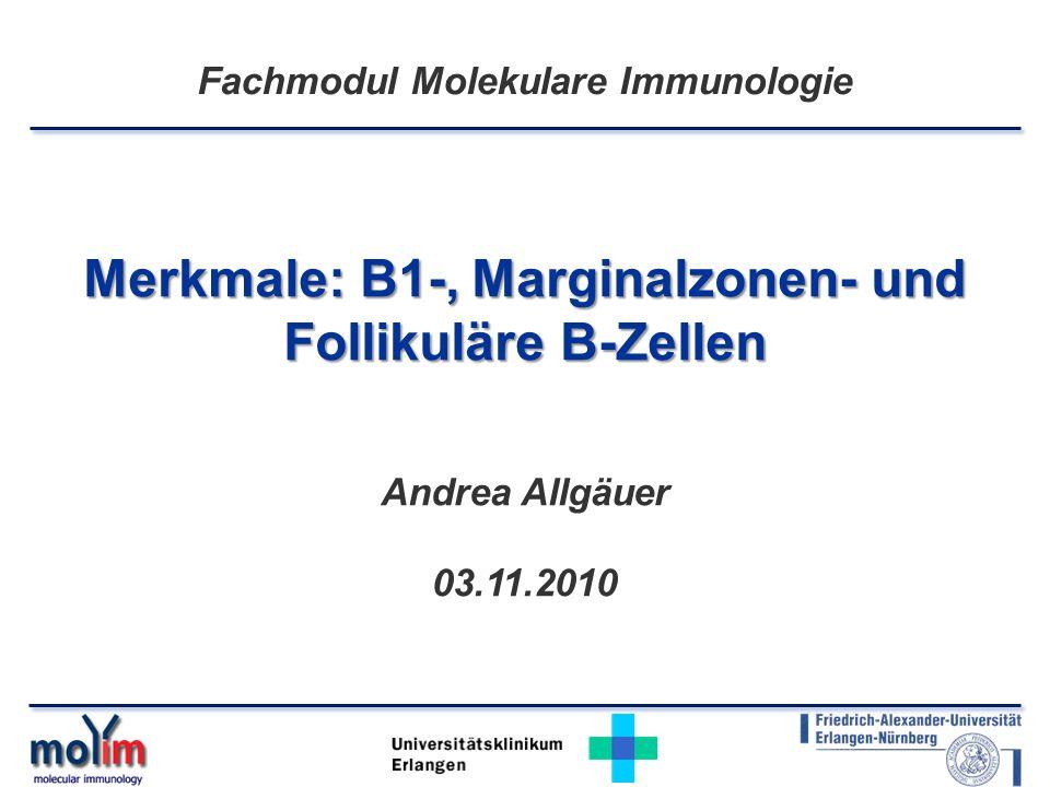 Universitätsklinikum Erlangen Merkmale: B1-, Marginalzonen- und Follikuläre B-Zellen Andrea Allgäuer 03.11.2010 Fachmodul Molekulare Immunologie