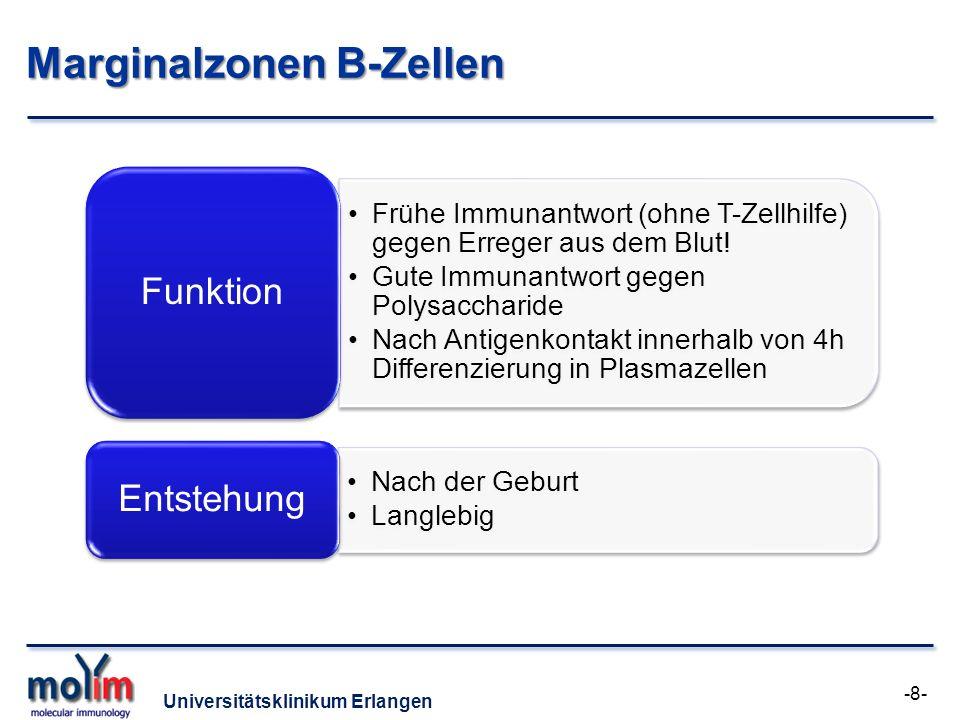 Universitätsklinikum Erlangen Marginalzonen B-Zellen Frühe Immunantwort (ohne T-Zellhilfe) gegen Erreger aus dem Blut! Gute Immunantwort gegen Polysac