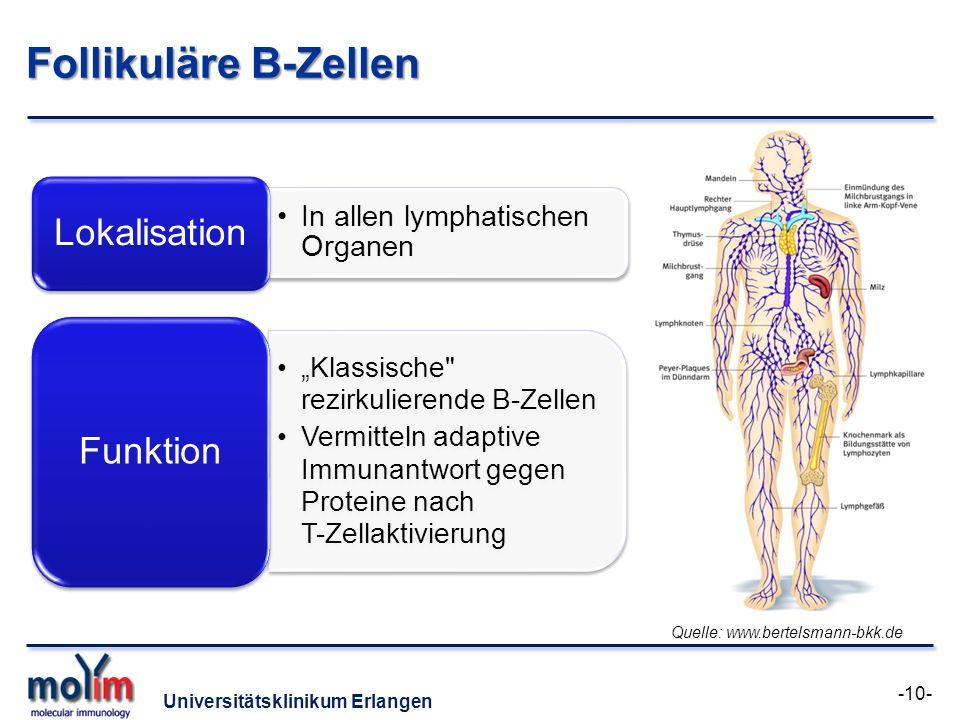 Universitätsklinikum Erlangen Follikuläre B-Zellen In allen lymphatischen Organen Lokalisation Klassische