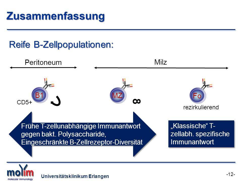 Universitätsklinikum Erlangen Zusammenfassung B1 Reife B-Zellpopulationen: Fo MZ Fo Peritoneum Milz Frühe T-zellunabhängige Immunantwort gegen bakt. P