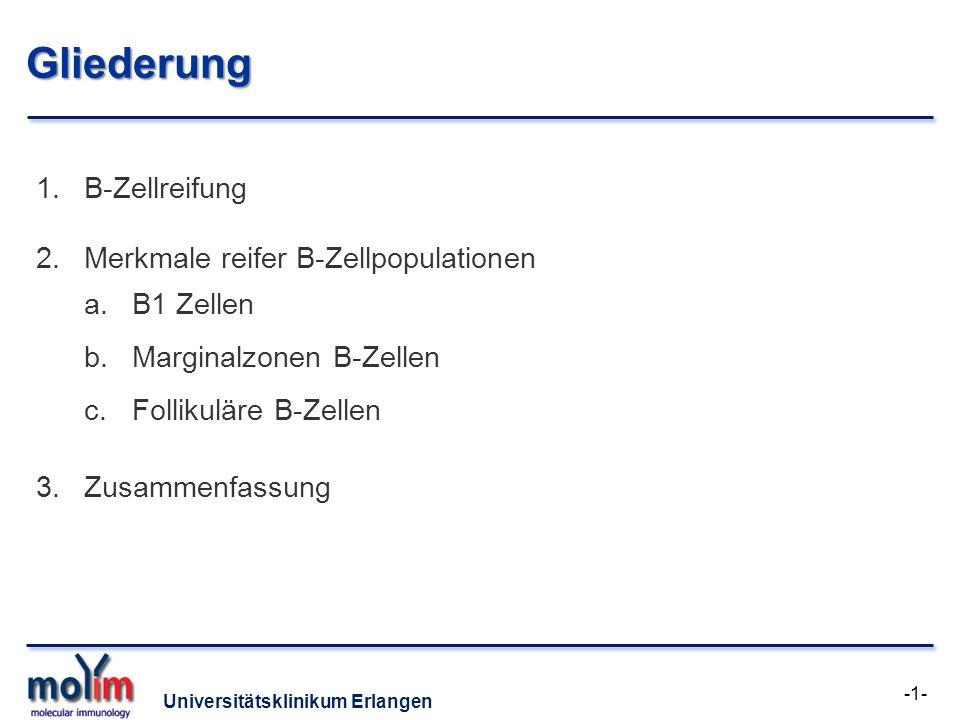 Universitätsklinikum Erlangen B-Zellreifung -2- Zentrale Reifung Stamm- zelle Periphere Reifung Aktivierung Unreife B-Zelle Übergangs- B-Zelle Ag THTH Gedächtnis- B-Zelle Plasmazelle Reife B-Zelle