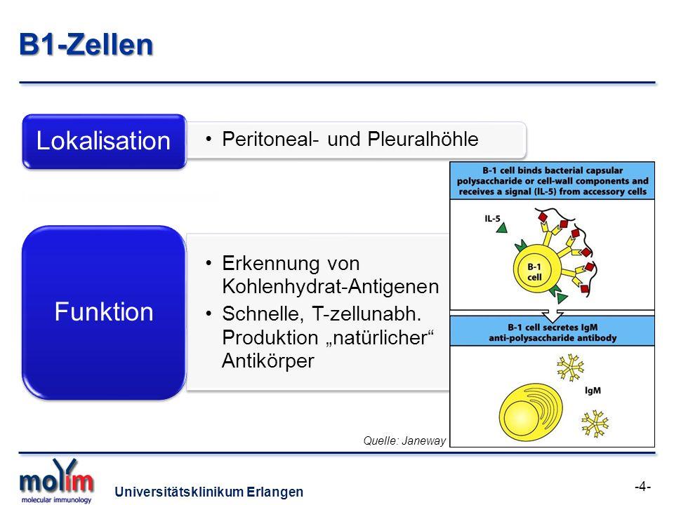 Universitätsklinikum Erlangen B1-Zellen Peritoneal- und Pleuralhöhle Lokalisation Erkennung von Kohlenhydrat-Antigenen Schnelle, T-zellunabh. Produkti