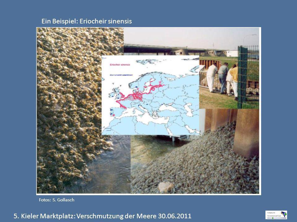 5. Kieler Marktplatz: Verschmutzung der Meere 30.06.2011 Ein Beispiel: Eriocheir sinensis Fotos: S. Gollasch
