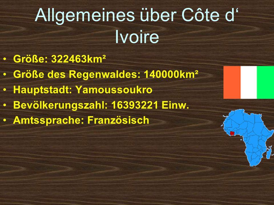 Allgemeines über Côte d Ivoire Größe: 322463km² Größe des Regenwaldes: 140000km² Hauptstadt: Yamoussoukro Bevölkerungszahl: 16393221 Einw. Amtssprache