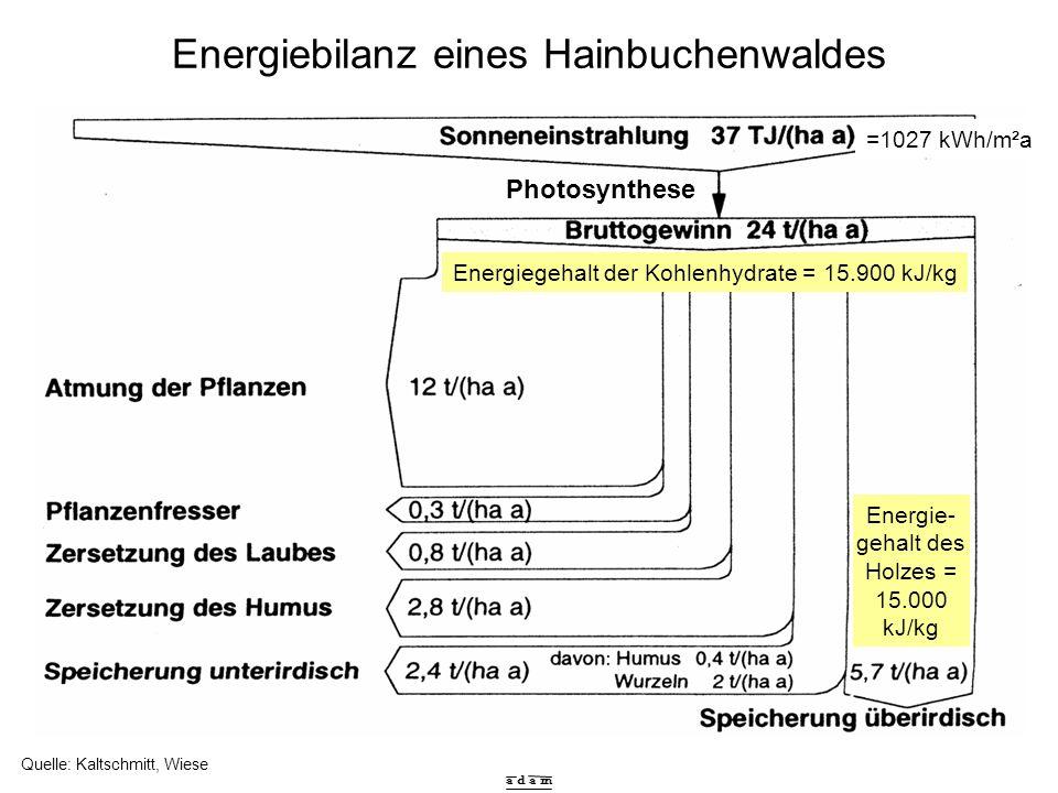 a d a m Energiebilanz eines Hainbuchenwaldes Quelle: Kaltschmitt, Wiese Energiegehalt der Kohlenhydrate = 15.900 kJ/kg Energie- gehalt des Holzes = 15