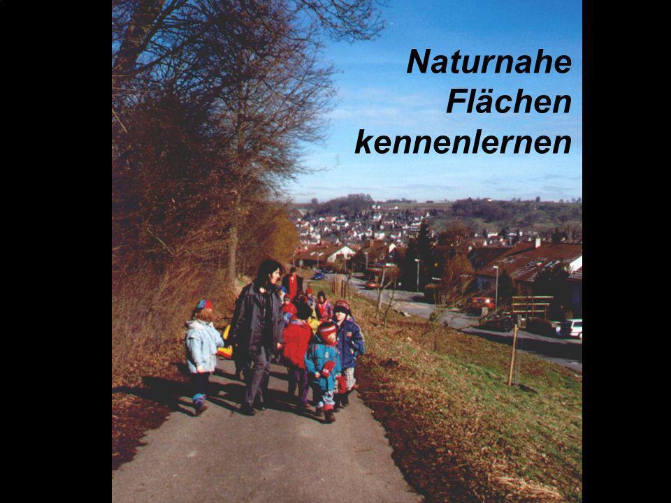Durch die Öffnung des Kindergartens werden Lebensräume und Erlebnisfelder zurückerobert, die Kindern aufgrund der Verkehrsgefährdung oder anderer Fakt