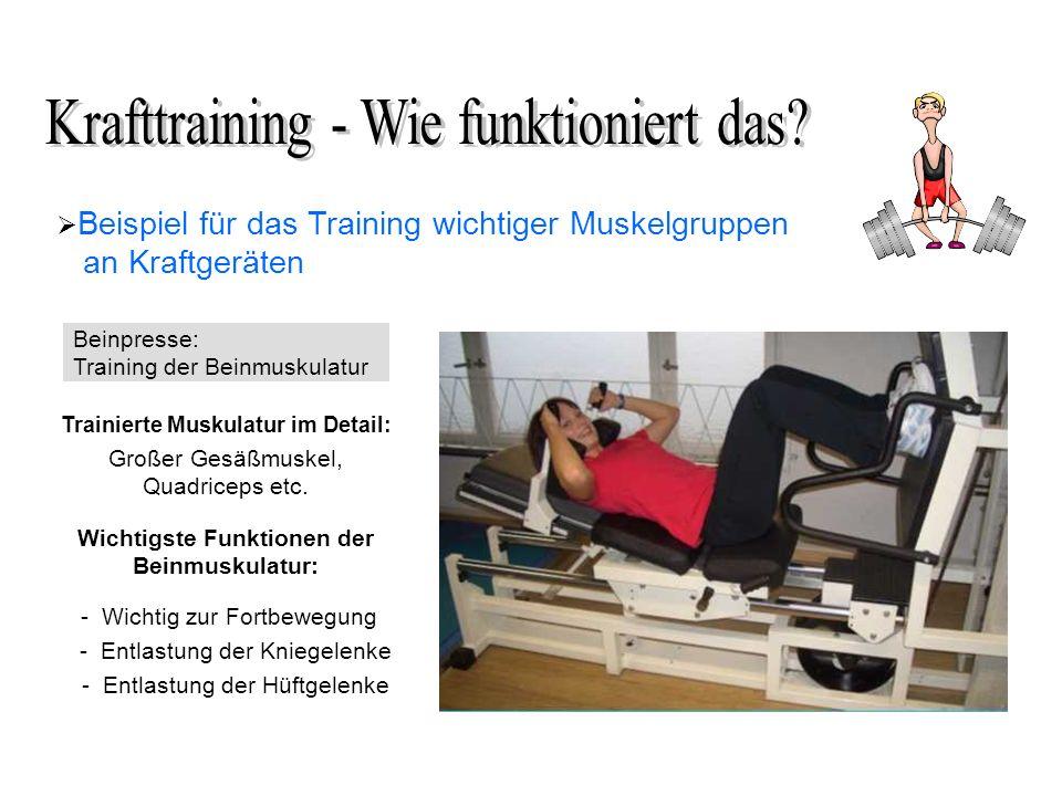 Beispiel für das Training wichtiger Muskelgruppen an Kraftgeräten Beinpresse: Training der Beinmuskulatur Trainierte Muskulatur im Detail: Großer Gesäßmuskel, Quadriceps etc.