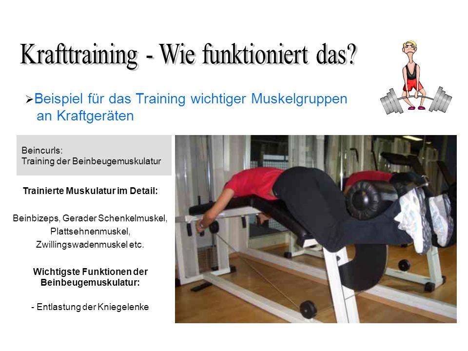 Beispiel für das Training wichtiger Muskelgruppen an Kraftgeräten Beincurls: Training der Beinbeugemuskulatur Trainierte Muskulatur im Detail: Beinbizeps, Gerader Schenkelmuskel, Plattsehnenmuskel, Zwillingswadenmuskel etc.
