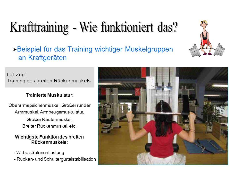 Beispiel für das Training wichtiger Muskelgruppen an Kraftgeräten Lat-Zug: Training des breiten Rückenmuskels Trainierte Muskulatur: Oberarmspeichenmuskel, Großer runder Armmuskel, Armbeugemuskulatur, Großer Rautenmuskel, Breiter Rückenmuskel, etc.