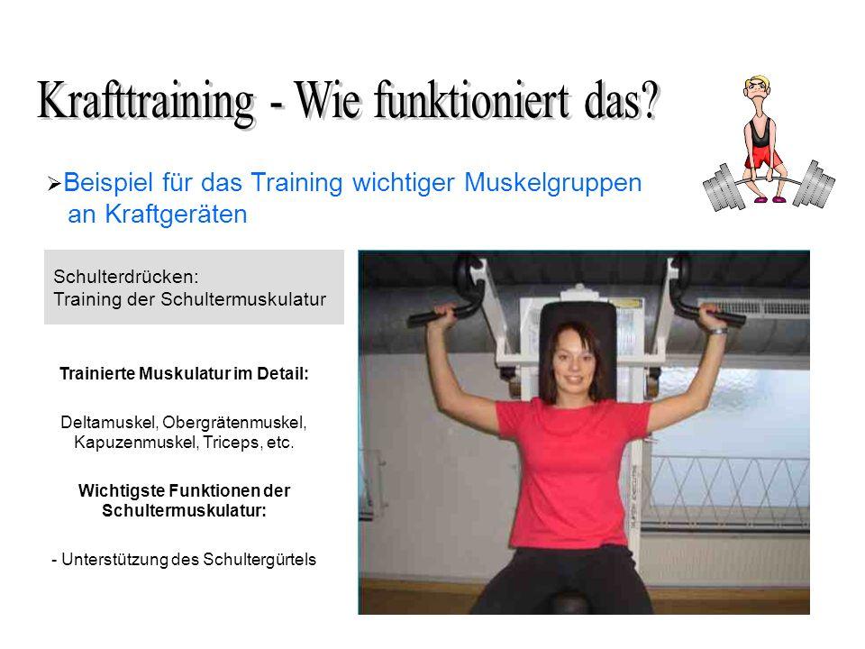 Beispiel für das Training wichtiger Muskelgruppen an Kraftgeräten Schulterdrücken: Training der Schultermuskulatur Trainierte Muskulatur im Detail: Deltamuskel, Obergrätenmuskel, Kapuzenmuskel, Triceps, etc.
