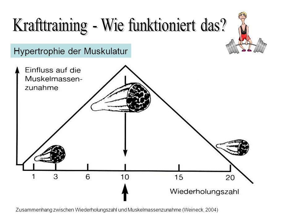Hypertrophie der Muskulatur Zusammenhang zwischen Wiederholungszahl und Muskelmassenzunahme (Weineck, 2004)