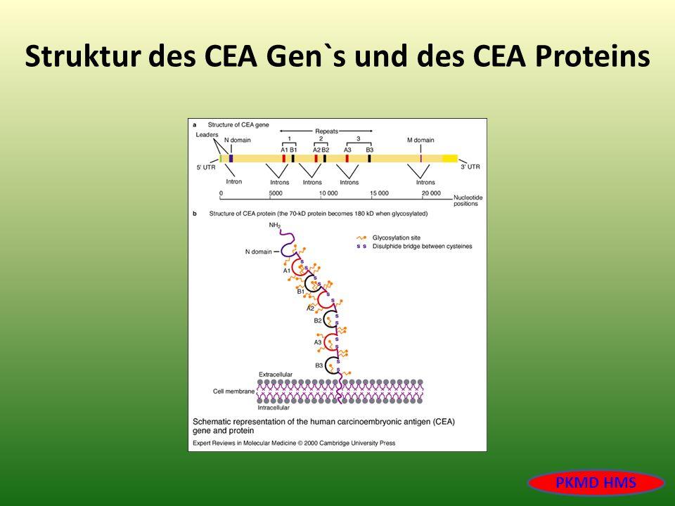 Struktur des CEA Gen`s und des CEA Proteins PKMD HMS