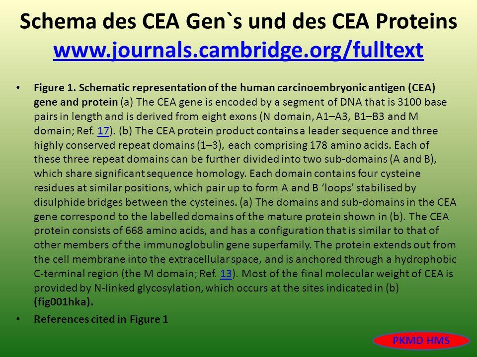 Schema des CEA Gen`s und des CEA Proteins www.journals.cambridge.org/fulltext www.journals.cambridge.org/fulltext Figure 1. Schematic representation o