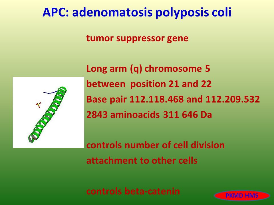 APC: adenomatosis polyposis coli tumor suppressor gene Long arm (q) chromosome 5 between position 21 and 22 Base pair 112.118.468 and 112.209.532 2843