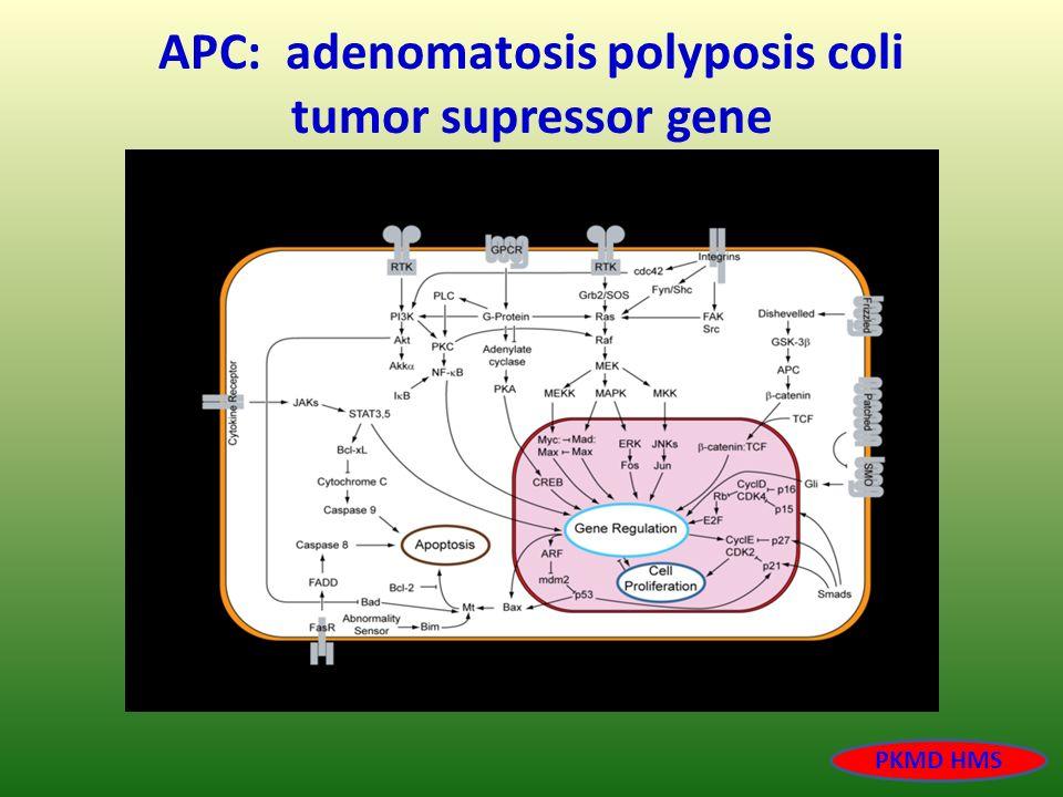 APC: adenomatosis polyposis coli tumor supressor gene PKMD HMS