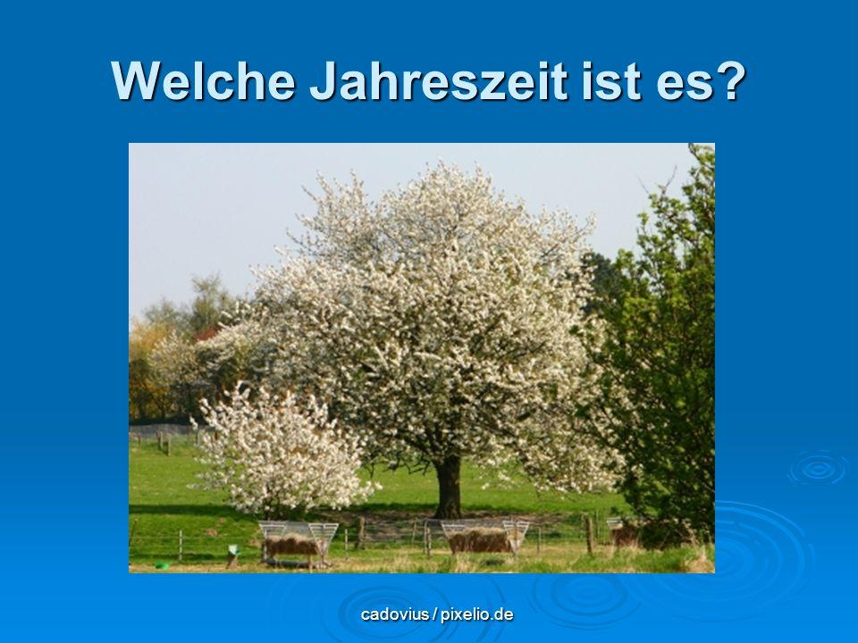 Welche Jahreszeit ist es? cadovius / pixelio.de cadovius / pixelio.de