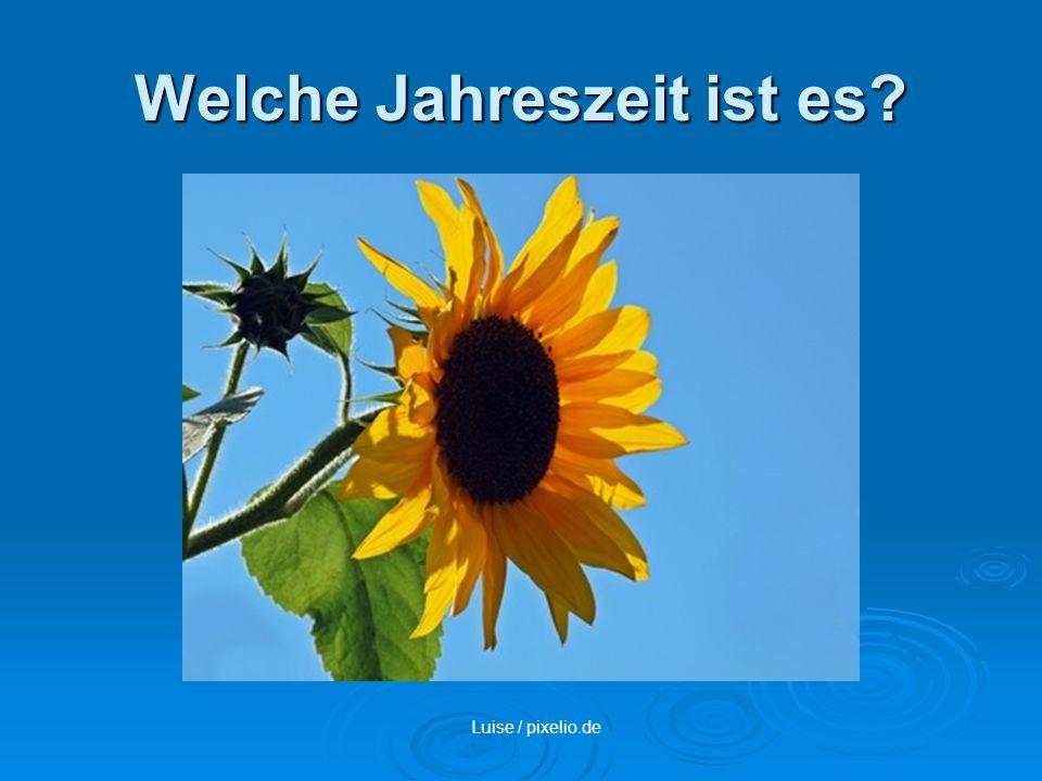 Welche Jahreszeit ist es? Luise / pixelio.de
