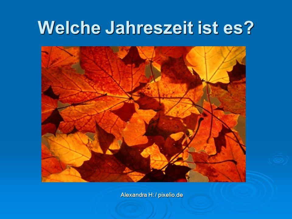 Welche Jahreszeit ist es? Alexandra H: / pixelio.de Alexandra H: / pixelio.de