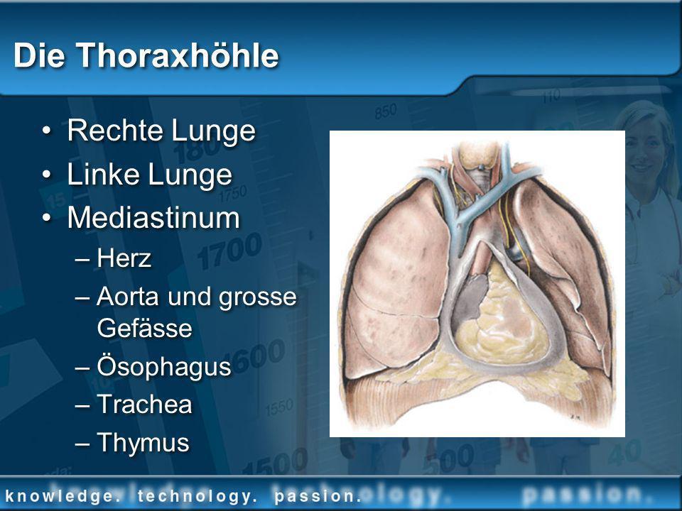 Die Thoraxhöhle Rechte Lunge Linke Lunge Mediastinum –Herz –Aorta und grosse Gefässe –Ösophagus –Trachea –Thymus Rechte Lunge Linke Lunge Mediastinum