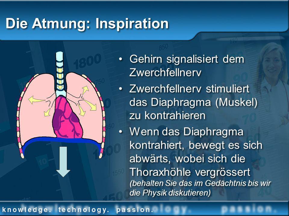 Die Atmung: Inspiration Gehirn signalisiert dem Zwerchfellnerv Zwerchfellnerv stimuliert das Diaphragma (Muskel) zu kontrahieren Wenn das Diaphragma k